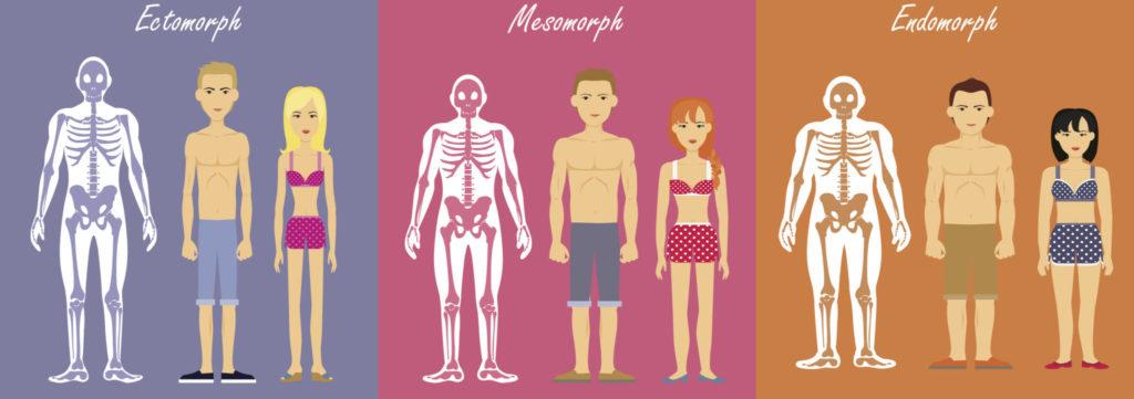 Visualisierung der Körpertypen